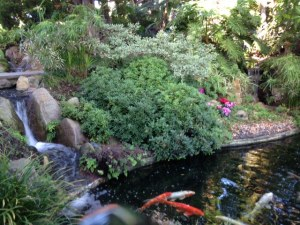 SRF Meditation Gardens Koi Pond