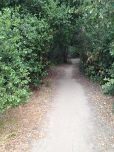 RC trail