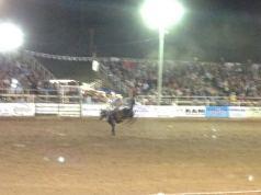 rodeohorse2